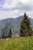 Sapin dans les montagnes Images libres de droits