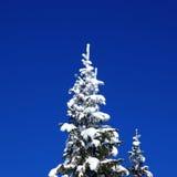 Sapin de l'hiver Photographie stock