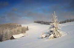 Sapin de Milou dans les montagnes Photo libre de droits