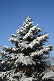 Sapin de neige photos stock