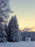 Sapin de neige en hiver Photographie stock libre de droits
