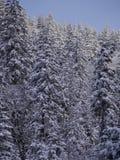 Sapin de paysage d'hiver Photo stock