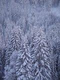 Sapin de paysage d'hiver Photographie stock libre de droits