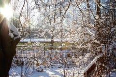 Sapin et buissons dans la neige images stock