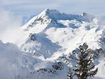 Sapin et montagne Photographie stock