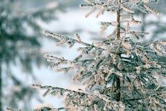 Sapin froid de neige de paysage de forêt d'hiver Photo stock