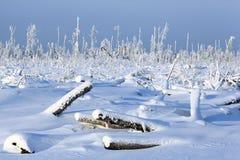 Sapin froid de neige de paysage de forêt d'hiver Image libre de droits