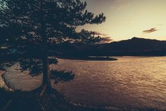 Sapin près de rivière de montagne Image libre de droits