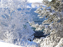 Sapin Snow-covered Photographie stock