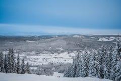 Sapin sous la neige photos libres de droits