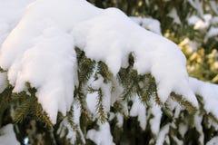 Sapin sous la neige Image libre de droits