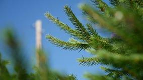 Sapin vert d'arbre de sapin couvert par la neige dans le jour d'hiver froid banque de vidéos