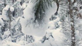 Sapin vert dans le plan rapproché de neige banque de vidéos