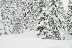 Sapins avec un bon nombre de neige, horizontaux Images libres de droits