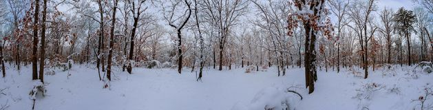 Sapins blancs majestueux rougeoyant par lumière du soleil Scène hivernale pittoresque et magnifique Parc national carpathien d'en photos stock