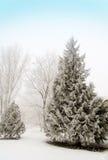 Sapins couverts de neige dans la forêt en La d'hiver de brouillard épais Photographie stock libre de droits