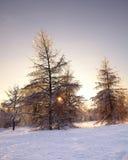Sapins couverts de neige et de glace en hiver Photos libres de droits