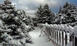 Sapins d'hiver et Canada de neige Images libres de droits