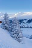 Sapins dans l'horaire d'hiver dans les Alpes photos stock