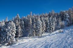 Sapins dans l'horaire d'hiver dans les Alpes photographie stock libre de droits