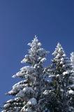 Sapins de l'hiver Images libres de droits