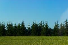 Sapins de vallée verte images stock