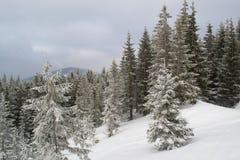 Sapins et buissons de paysage d'hiver dans la neige Photo stock