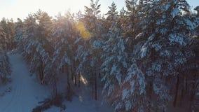 Sapins et pins dans la neige, lumière du soleil entre les arbres clips vidéos