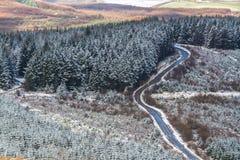 Sapins et route avec la bâche de neige légère, Royaume-Uni Coun Photographie stock