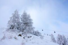 Sapins givrés à la pente de ski. Photos libres de droits
