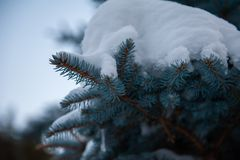 Sapins Snow-covered photographie stock libre de droits