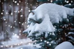 Sapins Snow-covered images stock