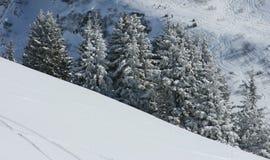 Sapins sous la neige images libres de droits