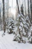 Sapins sous la neige Images stock