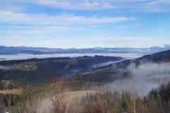 Sapins sur un pré en bas de la volonté à la forêt conifére en montagnes brumeuses d'alpe image stock