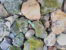 sapling stockfotos