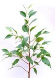 Sapling. Growing little tree like a symbol of growth Royalty Free Stock Photography