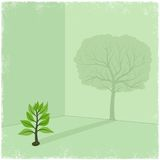 Sapling casting shadow of big tree Royalty Free Stock Images
