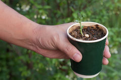 Sapling in cup coffice recycle, hand holding coffice recycle with sapling , save world. Nature background Royalty Free Stock Images