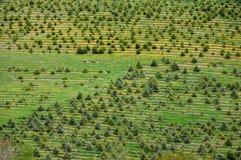 Sapling field. The saplings in the farm field of rural Ontario Stock Photos