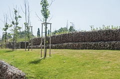 Sapling and gabion wire netting box. Saplings on park meadow and hexagonal wire netting gabion box wall with stones Royalty Free Stock Photos