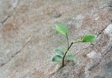 Sapling growing Stock Image