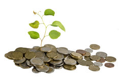 Sapling growing from coins Royalty Free Stock Photography