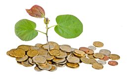 Sapling growing from coins Stock Photos