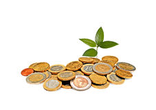 Sapling growing from coins Royalty Free Stock Image