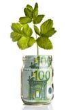 Sapling growing from euro money Stock Image