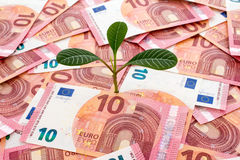 Sapling growing from euro Royalty Free Stock Image