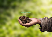Sapling in hand as of agriculture. stock photo