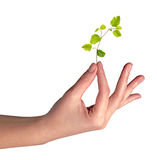 Sapling  in hand Royalty Free Stock Photos