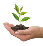 Sapling in hands Stock Image